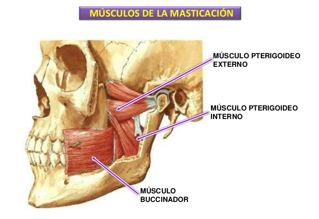 El entrenamiento de los músculos de la espalda para la lucha contra el dolor en la columna vertebral